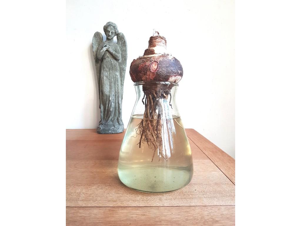 engel tafel hyacint